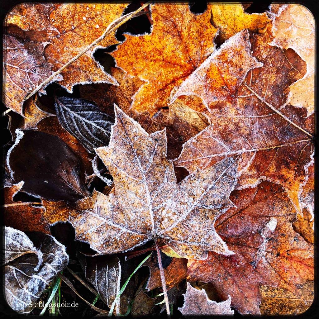 Natur am Morgen im Herbst